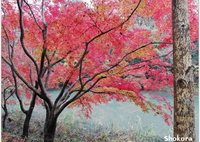 自然公園の紅葉Ⅱ