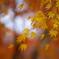 秋かがやく♪5