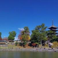 奈良の秋はこれで決まり