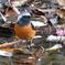 都市公園で出会った小鳥