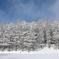 Tree & Snow & Sky