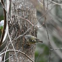 油山の野鳥たち