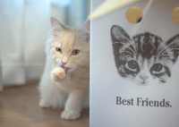 _BestFriends