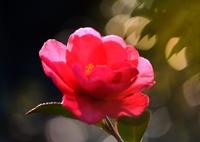 赤く咲いても 冬の花 咲いてさびしい~
