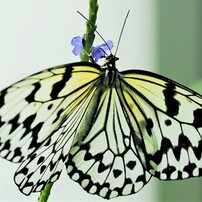 冬の蝶~㉑