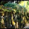 石垣とコケのグラデーション