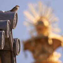 太子様の鳳凰と雀1。