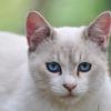 Blue eyes*