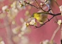 春の訪れⅡ