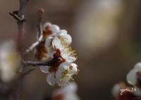 写真句:梅花2020 #4:春を告げる