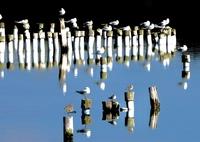水鳥達の休息②