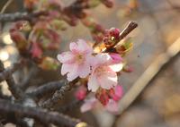 早い春の訪れ