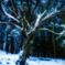 2020 冬 英彦山の森 #6