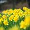 春の花さきそろう