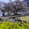 潤水の苑池