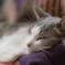 抱っこされて寝ているネコ吉