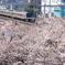 桜とコラボしてる中央線が好きだ!