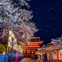 浅草寺桜吹雪