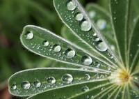 輝く水滴 Ⅱ