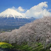 富士と桜 (S)