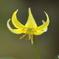 黄色の妖精②