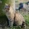 猫 20032315