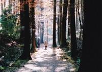 秋の高山寺 ⑤