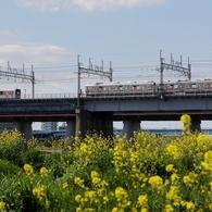河原は菜の花盛り -3