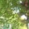 近所の公園 青紅葉