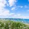 初夏の浜辺