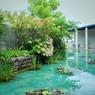 睡蓮の中庭で