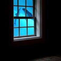 イルカの戯れる窓辺
