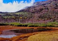 涼風渡る栂池自然園