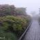 朝靄の群落