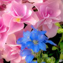 花の写真集