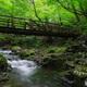 渓流の誘い8