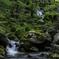 山泉の流れ