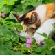 眠るネコ(クローバー畑で)