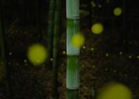 Banboo light