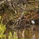 春の森林オールスターズ12