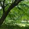 木陰の季節