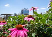 夏が咲く‥屋上ガーデン