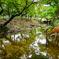 奈良公園の春日野園地にて