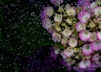 Raindrop filter