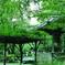 緑溢れる梅雨の境内