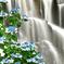 癒しの紫陽花滝