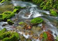行く川の流れは絶えずして