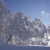 樹氷 乱れ