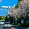 Re:ジャルはち✈桜街道
