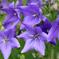 庭の花34